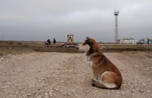 Собаки Горы Клементьева одобряют начавшееся благоустройство территорий